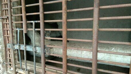 На ул. Мариупольской отравили пять котов и четверых замуровали в подвале (фото, обновлено)