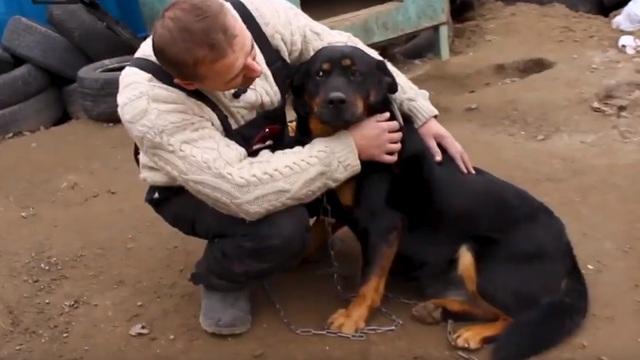 Как ведут себя ставшие домашними собаки из калининградских приютов (видео)