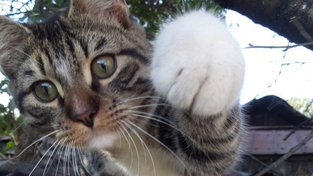 В районе ул. Ялтинской неизвестный выстрелил в котёнка из пневматики