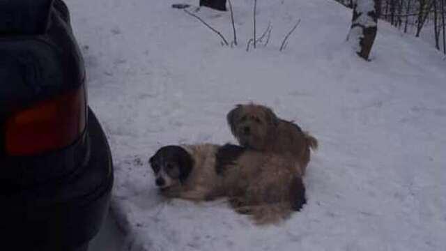 В Калининграде пёс охранял брошенную на морозе больную собаку (фото)