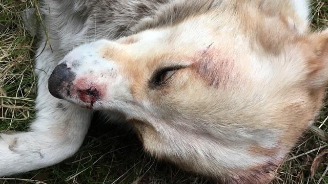 В Зеленоградском районе неизвестные до смерти избивают бездомных собак (фото)