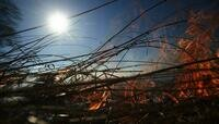 В Калининградской области за сутки 18 раз поджигали сухую траву