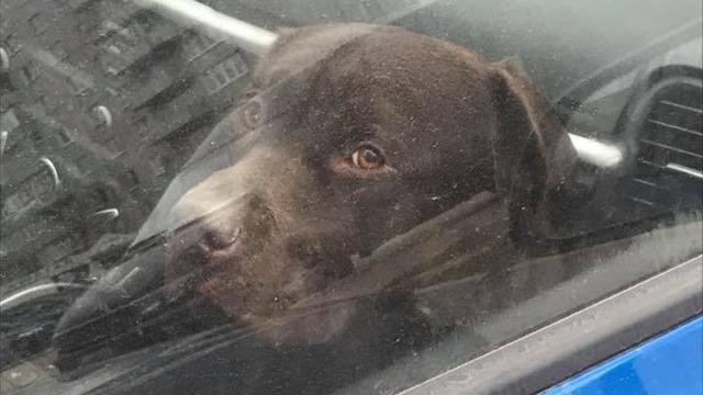 Калининградцы оставили собаку в закрытой машине на полтора часа