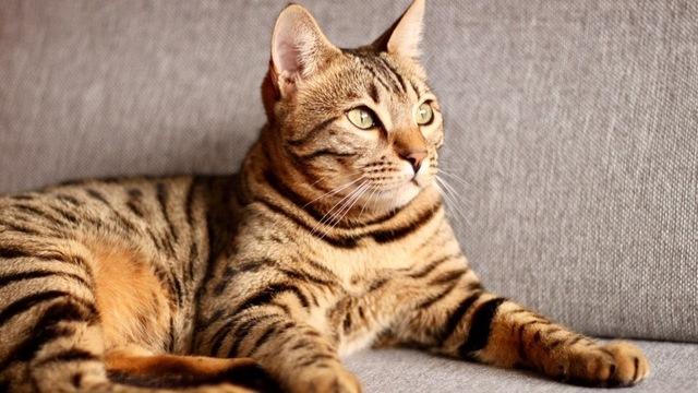 Пятнадцать усатых мордашек: фотоподборка ко Дню кошек от читателей