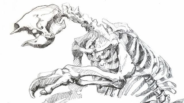 На раскопках в пещере майя в США обнаружили останки четырёхметрового существа