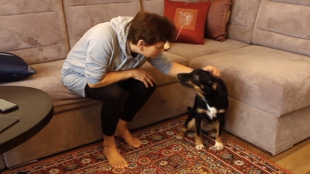 Как живут в квартирах собаки из калининградских приютов (видео)