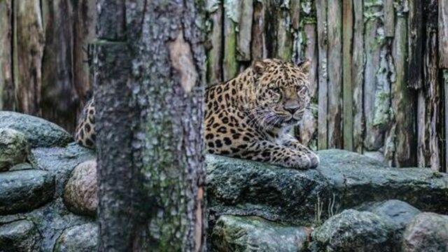 Калининградский зоопарк с 18 марта будет работать на два часа дольше