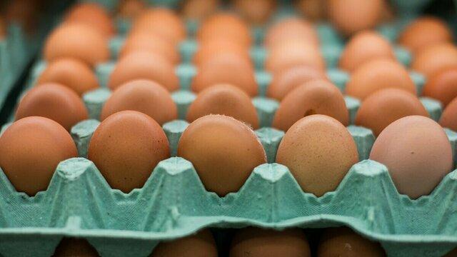 В Россельхознадзоре предупредили о возможном заносе птичьего гриппа в регион с контрафактными яйцами