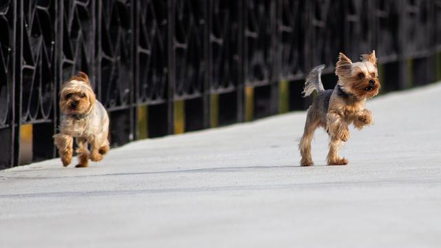 """Эксперты назвали самую """"кусачую"""" породу собак"""