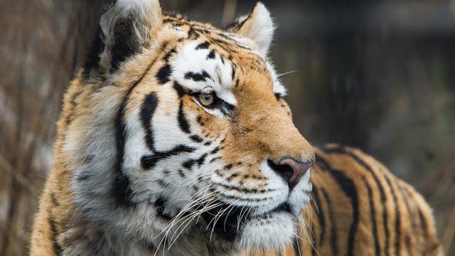 В России разработали новые правила содержания животных в цирках и зоопарках