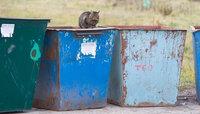 Тест: рассортируйте мусор правильно