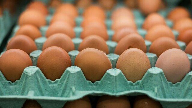 В калининградском УФАС не смогли объяснить причину скачка цен на яйца в конце 2018 года