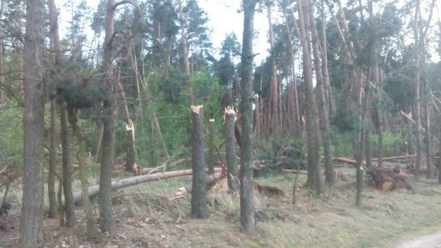 В Польше пронёсся торнадо и повалил деревья (видео)