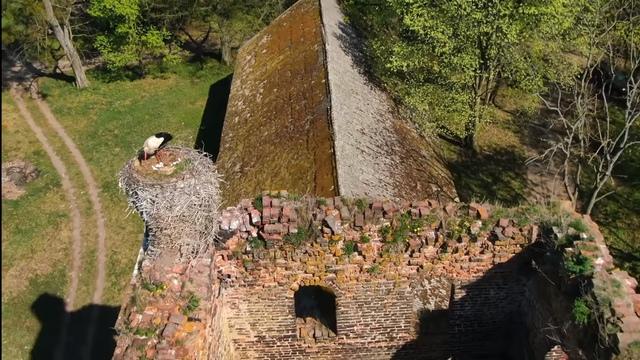 Аист свил гнездо на одной из старейших калининградских кирх (видео с дрона)