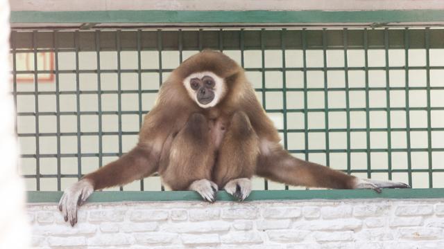 Слониха-симулянтка, нервный гиббон и тигр-философ: ветврач — о жизни животных в Калининградском зоопарке