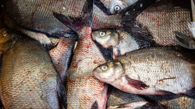 В России предложили ввести нормы вывоза улова для рыбаков-любителей