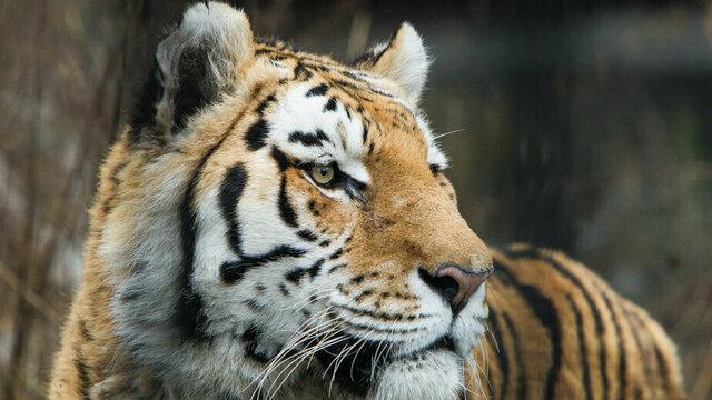 Калининградский зоопарк опубликовал подробную программу Музейной ночи