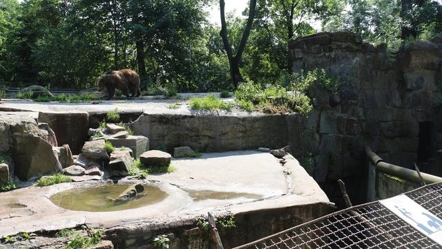 В Калининградском зоопарке перестроят  медвежатник и реконструируют вольер для тюленей