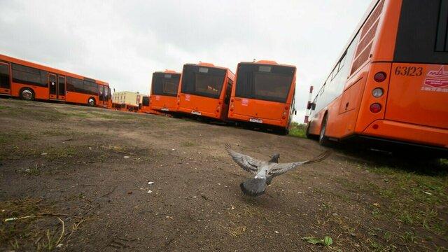 Внедрение электронного билета во всех автобусах Калининграда отсрочили до конца июля
