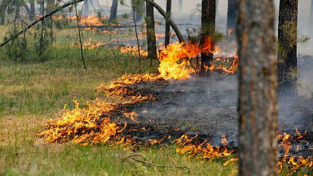 В Сибири шаманы проведут ритуалы для защиты тайги от пожаров