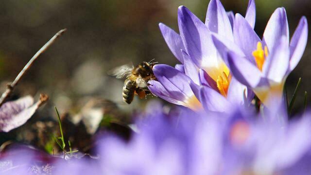 Учёные о массовой гибели пчёл в России: на смену им придут мухи, осы и муравьи