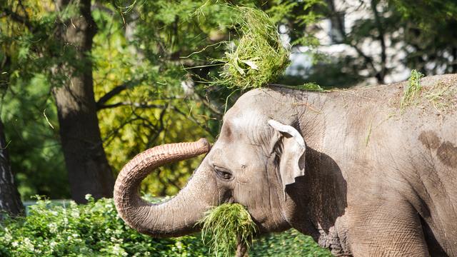 В Литве планируют запретить использовать диких животных в цирке