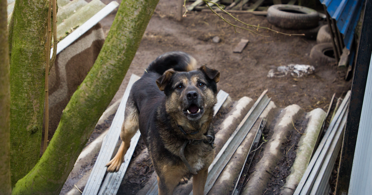В Калининграде собака укусила за лицо семилетнюю девочку