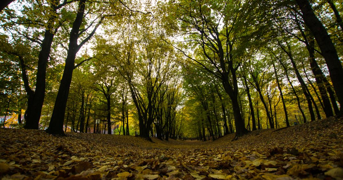В Багратионовском районе в лесу пропал 79-летний мужчина