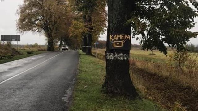 На дороге Янтарный — Калининград самодельный дорожный знак прикрепили к дереву (фото)