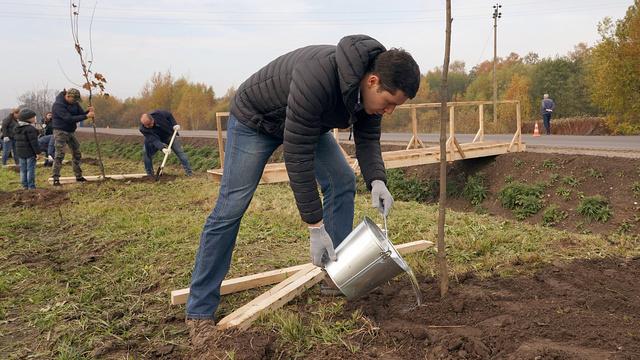 Вдоль трассы Гурьевск — Полесск высадили 247 остролистных клёнов
