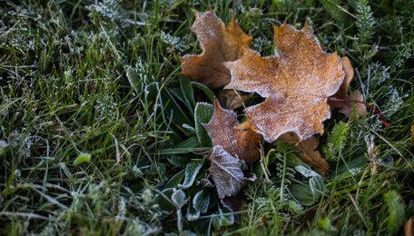 Синоптики рассказали, когда в Калининграде наступит похолодание