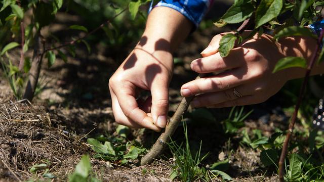 Калининградцев приглашают посадить дерево в парке Теодора Кроне