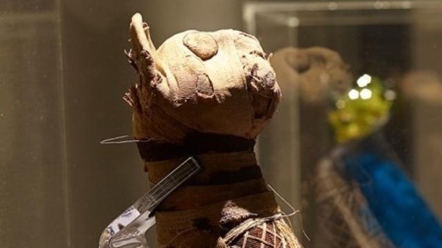 Учёные выяснили, что скрывается внутри древнеегипетской мумии кошки