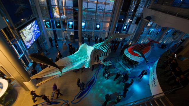 Самые интересные выставки в Калининграде, которые невозможно пропустить
