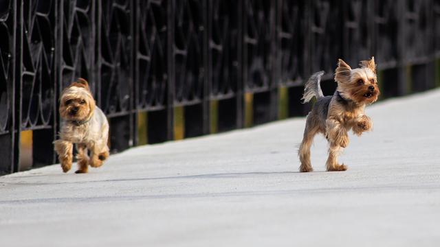 В Калининграде поиском пропавших в новогодние праздники собак займутся волонтёры