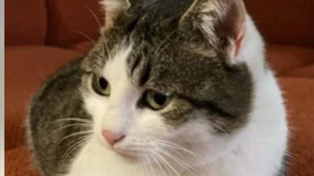 Житель Новороссийска продаёт кошку-