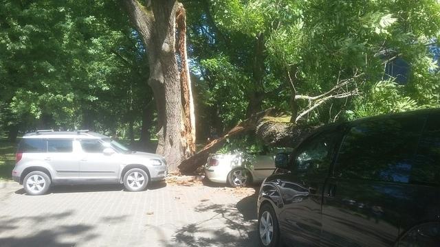 Авторазбор «Клопс»: на машину упало дерево, кто ответит за ущерб