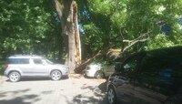 """Авторазбор """"Клопс"""": как получить компенсацию, если на вашу машину упало дерево"""