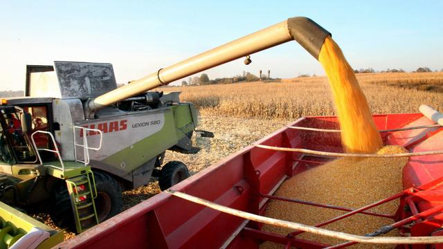 Калининградская область заняла четвёртое место в России по урожайности зерна
