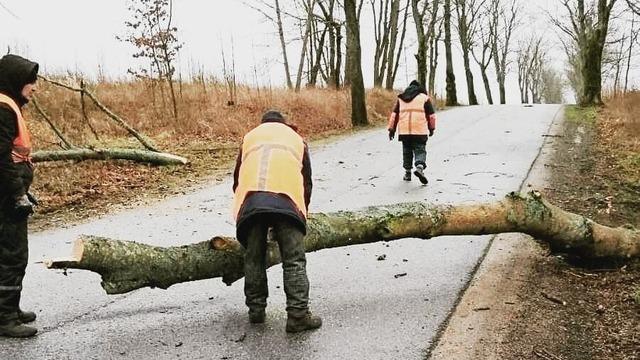 Власти региона подсчитали, сколько деревьев упало на дороги области за сутки (фото)