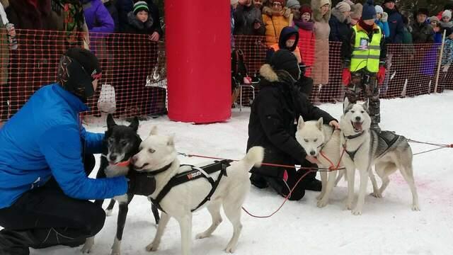 Калининградец участвовал в гонке на собачьих упряжках в Тотьме