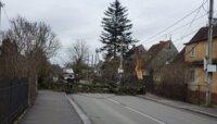 На ул. Муромской на дорогу рухнуло дерево (фото)