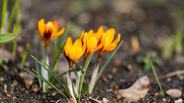 Февральские цветения в Ботаническом саду Калининграда