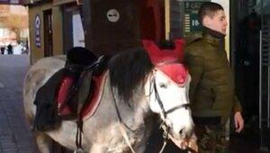 Калининградец верхом на полупони догнал грабителя и сдал полиции (видео)