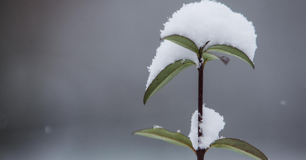 Синоптики: в Калининграде в субботу выпадет снег - Новости ...