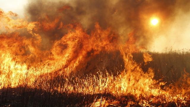 В Калининградской области за сутки пожарные больше 20 раз тушили сухую траву