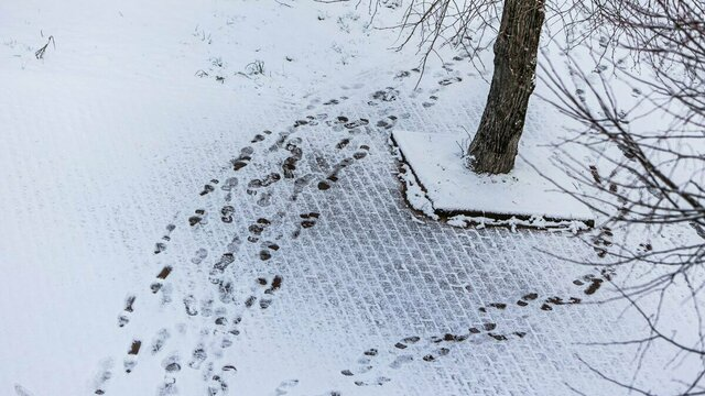 Мартовский снег в Калининграде (фото)