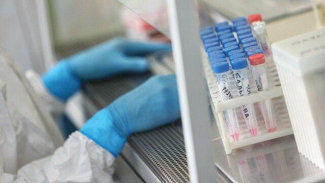 ВОЗ сообщила о рекордном числе заболеваний COVID-19 за сутки с начала пандемии