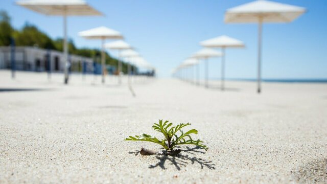 Как выглядит пляж в Янтарном в первый день лета без туристов (фоторепортаж)