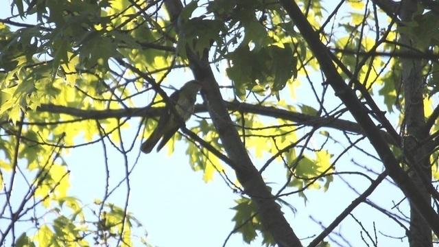 В Ботаническом саду без людей исчезли голуби с утками и впервые появилась иволга (фото)